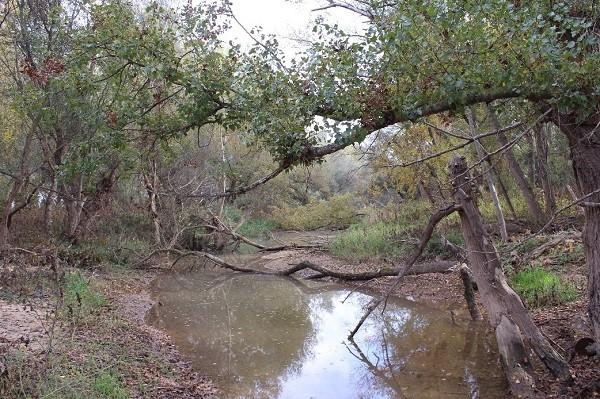 Pequeña Madre del Ebro