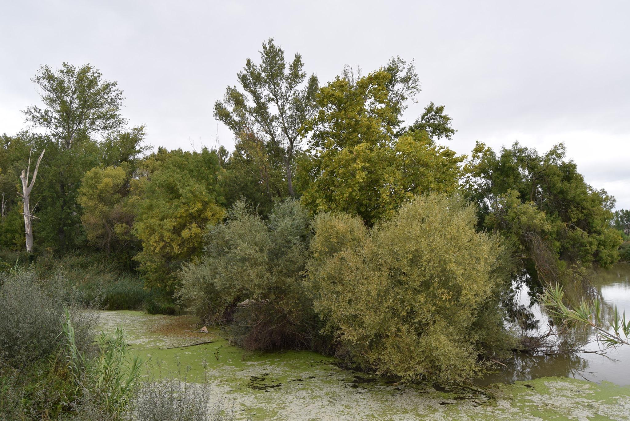 Fotografía: Soto de la Sabuquera (Logroño)